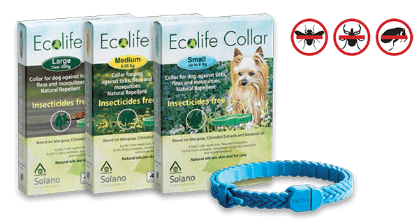 ecolife_collar_dog